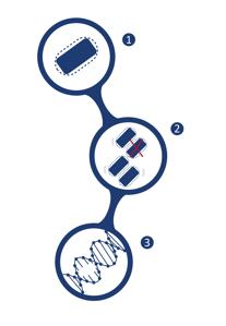 Biomaster Diagram
